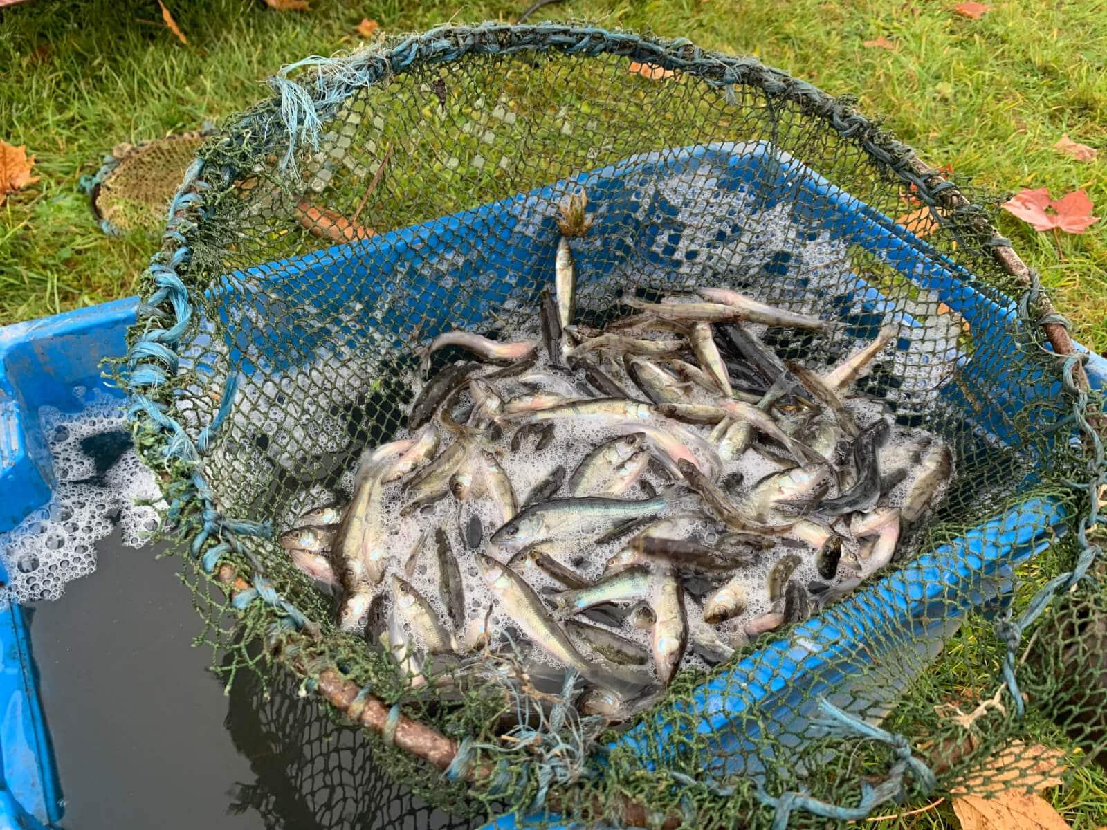 """Noslēdzies projekts """"Zivju resursu aizsardzības pasākumi Smiltenes novadā 2019.gadā"""""""