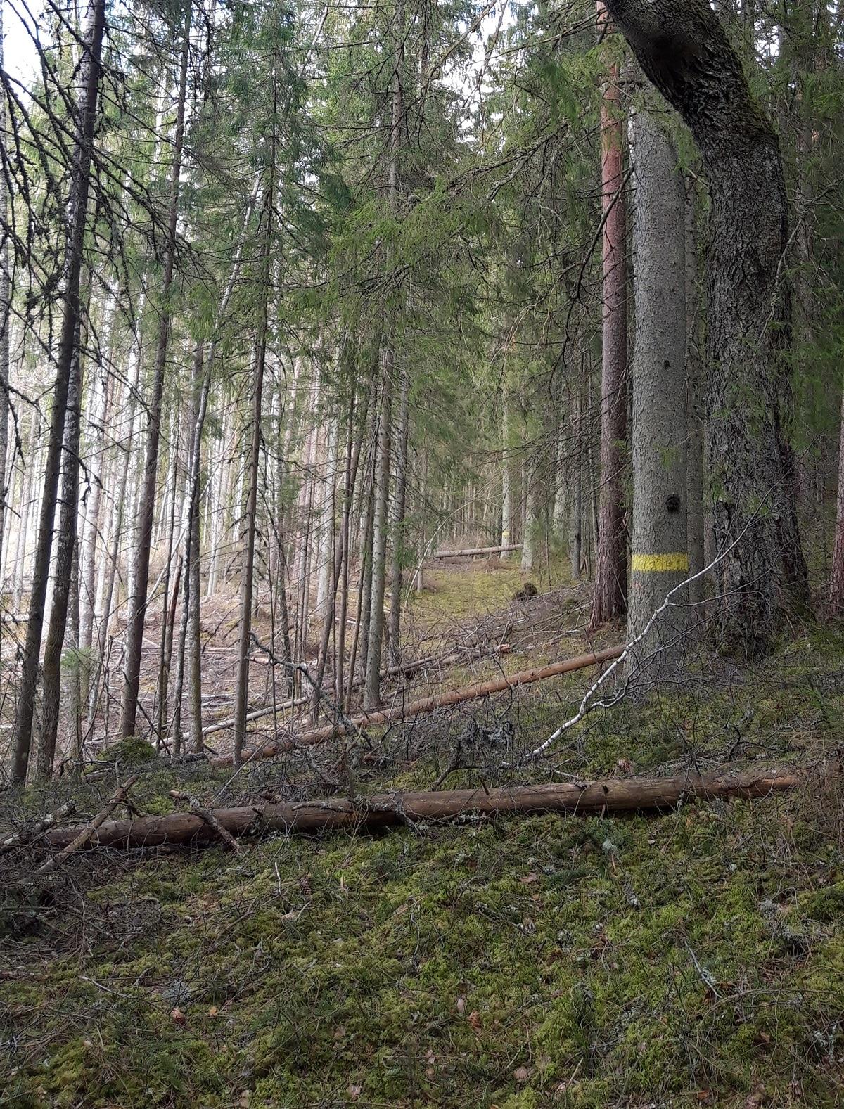 Rogainings Niedrāja un Spiciera ezera poligonos