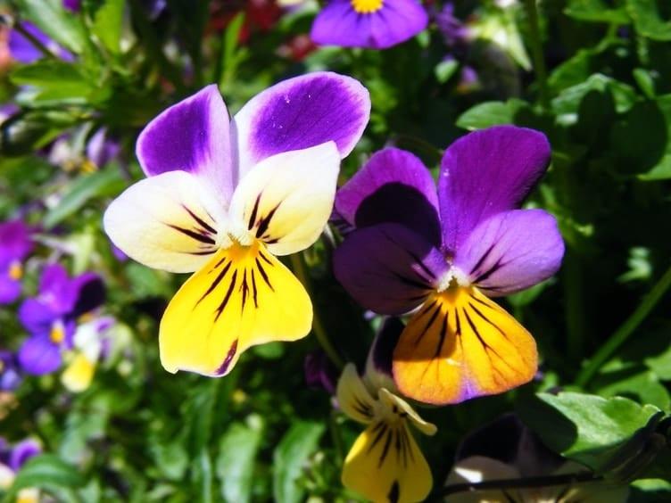 """Smiltenes bibliotēka aicina piedalīties konkursā """"Pavasara zieds"""""""