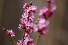 Iepedo-pavasari_Santa-Paegle-2