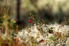 Iepedo-pavasari_Santa-Paegle-5